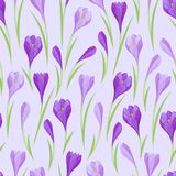 Spring flowers crocus natural seamless pattern.  Royalty Free Stock Image