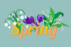 Spring flowers. Crocus, saffron, lily of the valley, snowdrops. Stock Photos