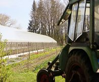 Farming, flowers cultivation in greenhouse Royalty Free Stock Photography
