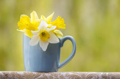 Spring flowers in a cup Royalty Free Stock Photo