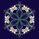 Spring flowers. Daffodil flowers interlaced into an intricate circular ornament on a dark blue background. Art Nouveau. Style drawing. Mandala tattoo design Royalty Free Stock Photography