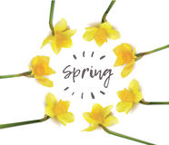Spring flowers daffodils in a circle on a white background. Inscription spring flowers daffodils in a circle on a white background. isolated  objects. photo Stock Images