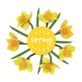 Spring flowers daffodils in a circle on a white background. Inscription spring flowers daffodils in a circle on a white background. isolated  objects. photo Stock Photos