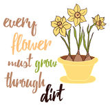 Spring flowers daffodils grows on the flower pot. Typographic poster. Stock Photo