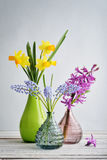 Spring flowers  daffodils, hyacinth and muscari Stock Photos