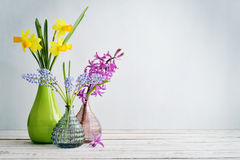Spring flowers  daffodils, hyacinth and muscari Royalty Free Stock Images