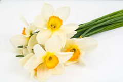 Spring flowers of daffodils on white background Royalty Free Stock Images