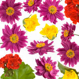Spring flowers - decorative background Stock Image