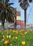 Spring Flowers in Deserted Christchurch City CBD royalty free stock photos