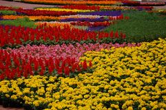 Spring Flowers Display in Pioneer Courthouse Square, Portland, Oregon. This is an annual display of spring flowers in Portland, Oregon`s Pioneer Courthouse Royalty Free Stock Photos