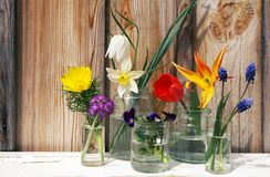 Spring flowers display on wood background. A display of spring multicolored flowers - daffodil, narcissus, pansy, primrose - in different glass jars on wood Stock Photos