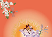 Spring flowers and dragonflies on red Stock Photos