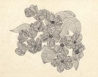 Spring flowers. Drawing with ballpen. Royalty Free Stock Images