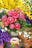 Spring flowers with easter cake and eggs Stock Images