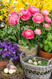Spring flowers and easter eggs decoration Royalty Free Stock Photos