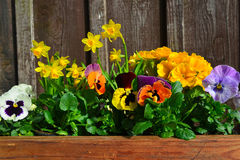 Spring Flowers easter Royalty Free Stock Images