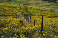 Spring flowers in Eastern Oregon Stock Image
