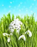 Spring flowers and egg deco in green grass Stock Photos