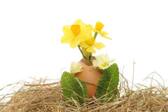 Spring flowers egg and hay Stock Images