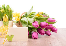Spring flowers and an empty greeting card Stock Image