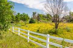 Spring Flowers in Fence Lined Pasture in Midwest Prairie Royalty Free Stock Photo