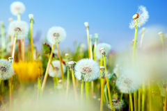 Spring flowers field Royalty Free Stock Photos
