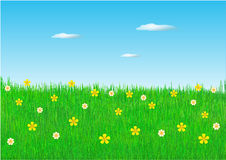 Spring flowers in field Royalty Free Stock Images