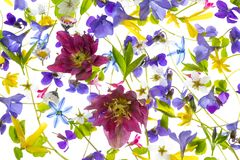 spring flowers - floral pattern Royalty Free Stock Photo