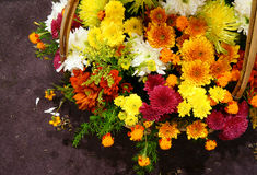 Spring flowers, flower basket Royalty Free Stock Images
