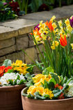 Spring Flowers in Flower Pot Stock Photo