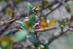 Spring Flowers. Spring flowering of a young tree in the sun and blue sky Stock Photo