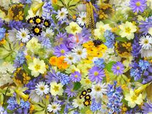 Spring Flowers, Flowers, Collage Royalty Free Stock Images