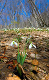 Spring flowers in forest Stock Photo