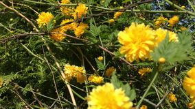 Spring flowers in forest and garden. Spring Flowers Blooming in Springtime stock video footage