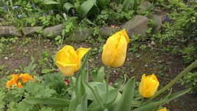 Spring flowers in forest and garden. Spring Flowers Blooming in Springtime stock video