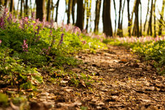 Spring flowers in forest Stock Photos
