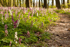 Spring flowers in forest Stock Image