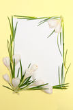 Spring flowers frame royalty free stock photos