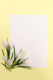 Spring flowers frame Royalty Free Stock Image