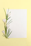 Spring flowers frame Royalty Free Stock Images