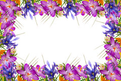 Spring flowers frame. Stock Photo