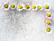 Spring flowers frame Royalty Free Stock Photo