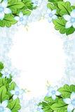 Spring Flowers frame Stock Photo