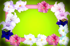 Spring flowers frame Royalty Free Stock Photography