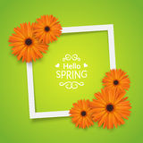 Spring flowers frame composition. Stock Images