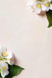 Spring flowers frame on old paper background Royalty Free Stock Image