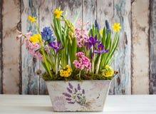 Spring flowers Stock Photo