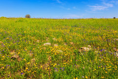 Spring flowers and fresh grass Royalty Free Stock Photo
