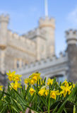 Spring Flowers in front of Whitstable Castle Royalty Free Stock Image
