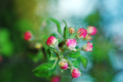 Spring flowers of fruit trees Stock Images